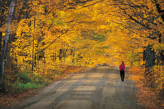 Woman Taking Brisk Walk Through Fall Foliage