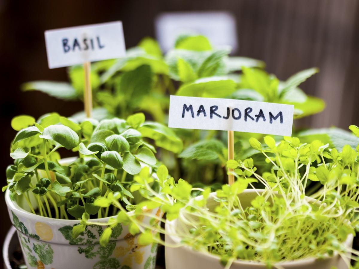 Home project indoor gardening with kids gerber life insurance blog indoor gardening with kids workwithnaturefo